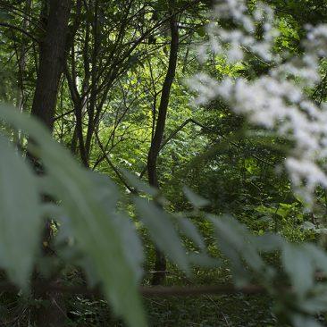 (Re-)Enchanting Landscape?